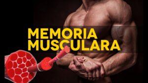 constructia memoriei musculare