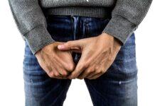 testicule